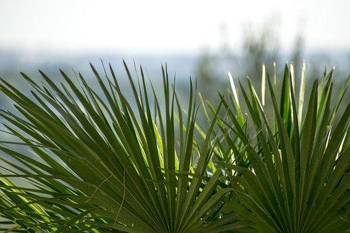 Plant, Focus, Plants, Nature, Green