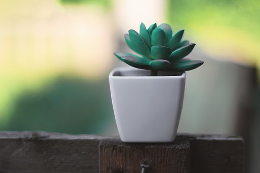 Plant, Plastic, Desk, Decoration, Decorative