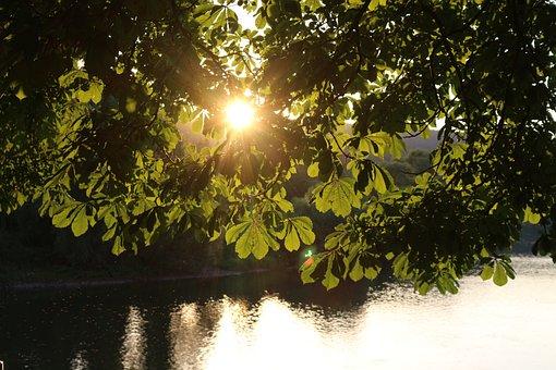 Chestnut, Tree, Leaves, River