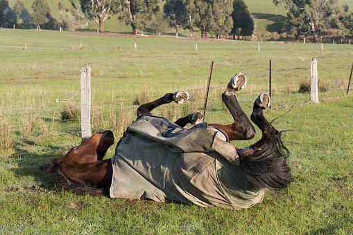 Horse, Horse Rug, Equine, Rugged, Roll, Rolling