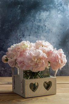 Cloves, Flower, Pink, Close Up, Flowers, Schnittblume