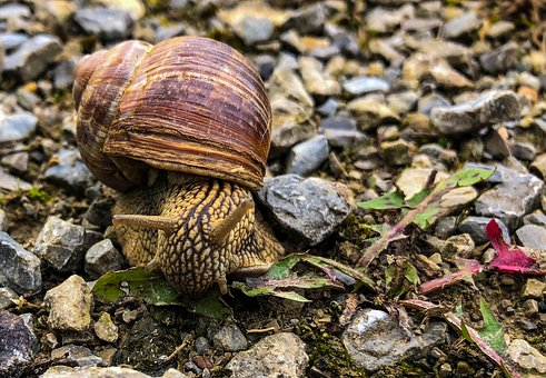 Snail, Stone, Away, Grey, Nature, Trail