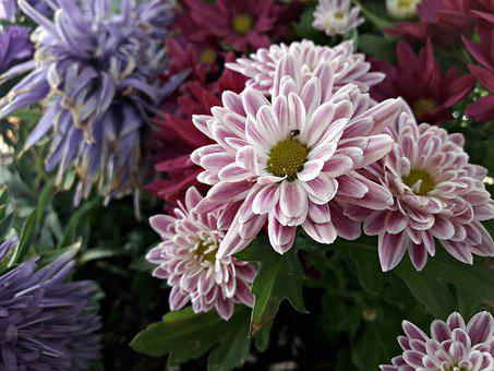 Flower, Summer, Spring, Nature, Pink, Blooming