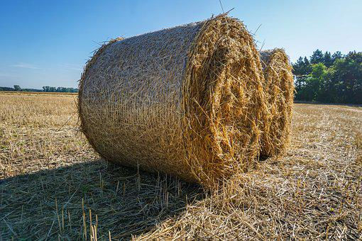 Straw Bales, Straw, Harvest, Agriculture, Field, Rural