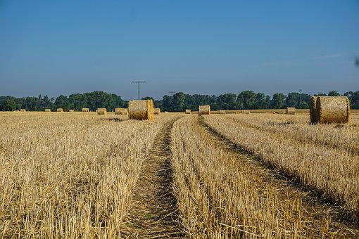 Field, Harvest, Straw Bales, Agriculture, Nature, Rural