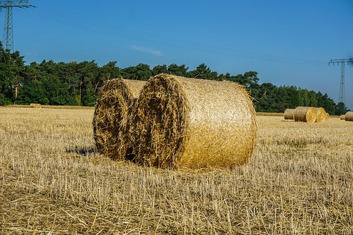 Straw Bales, Field, Harvest, Agriculture, Straw, Nature