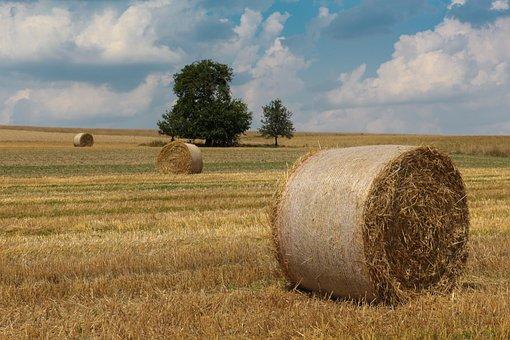 Harvest, Straw, Agriculture, Straw Bales, Rural, Summer