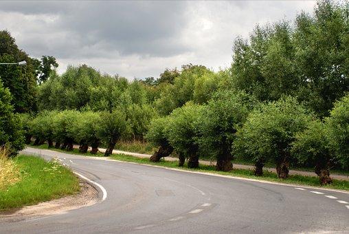 Bend, Street, Road, Traffic, Curve, Asphalt, Tree, View