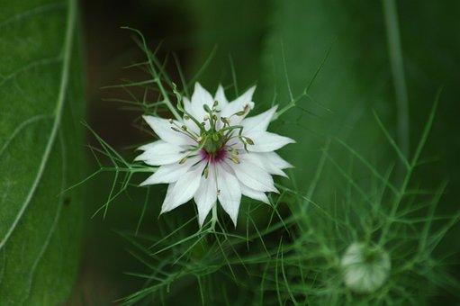 Nature, Flower, Flora, Leaf, Summer, Garden, Grass