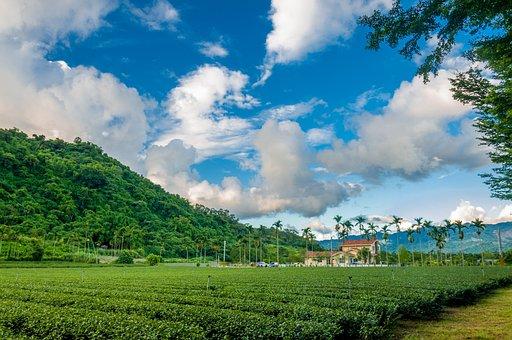 Tea Garden, Sky, Hillside, A Surname, Landscape, Tea
