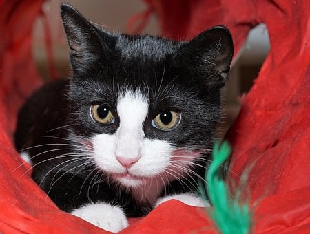 Cat, Black, White, Tunnel, Red, Pet, Animal