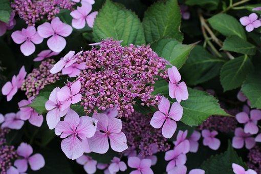 Plant, Flower, Purple, Bloom, Nature, Blossom, Violet
