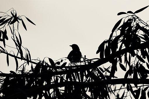 Nature, Silhouette, Bird, Sky, Wildlife, Outdoors, Wing