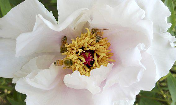 Flowers, The, White Flower, Spring Flowers, Bee