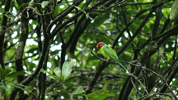 Parrot, Parakeet, Bird, Plumage, Cute, Nature, Green