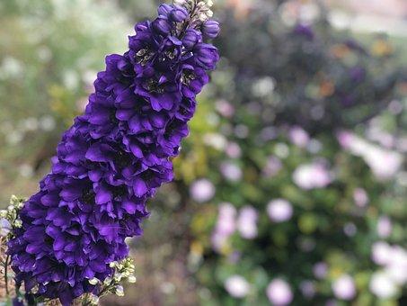 Flower Flowers, Purple, Bloom, Nature, Plant, Blossom