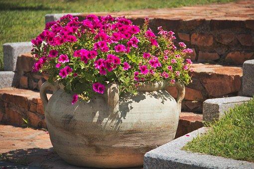 Flowers, Flowerpot, Plant, Nature, Pot, Blossom, Bloom