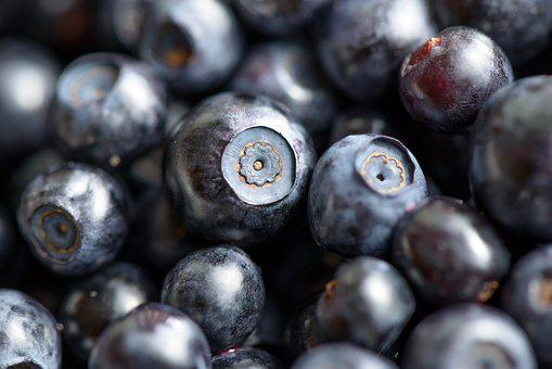 Berries, Forest, Blueberry, Ripe, Small, Sweet