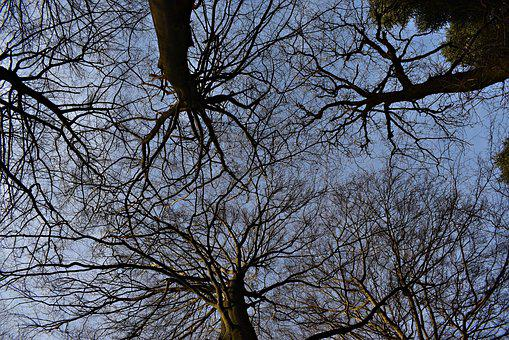 Trees, Nature, Forest, Canopy, Treetop, Sky, Autumn