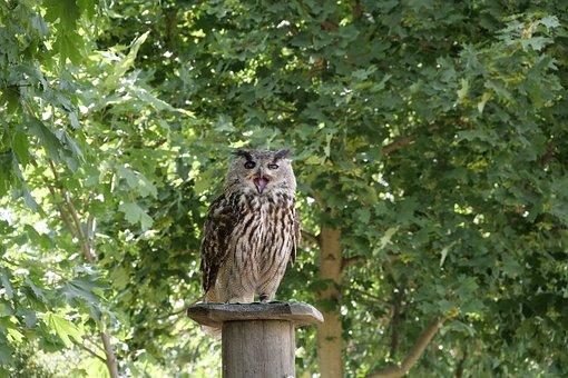 Bird, Wild Bird, Eagle Owl, Falconry Wörlitzer Park