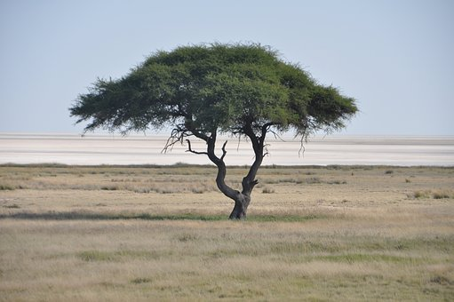 Tree, Etosha, Salt Pan, Namibia, Nature, Savannah