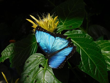 Sky Butterfly, Butterfly, Blue, Wing, Exotic
