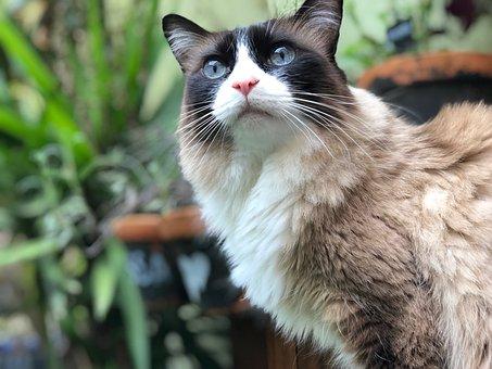 Cat, Female, Cute, Pet, Animal, Kitten, Portrait, Fur