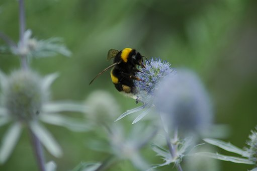 Nature, Insect, Bee, Summer, Flora, Outdoors, Flower