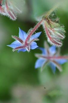 Nature, Leaf, Flower, Summer, Outdoors, Flora, Closeup