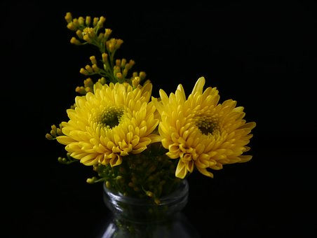 Yellow, Flower, Blossom, Bloom, Nature