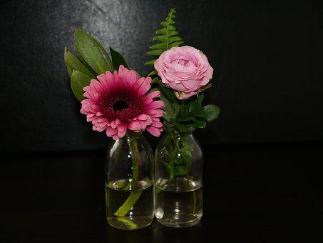 Flowers, Rose, Nature, Pink, Rose Bloom