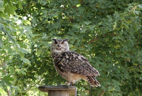 Animal World, Forest Bird, Nature, Eagle Owl