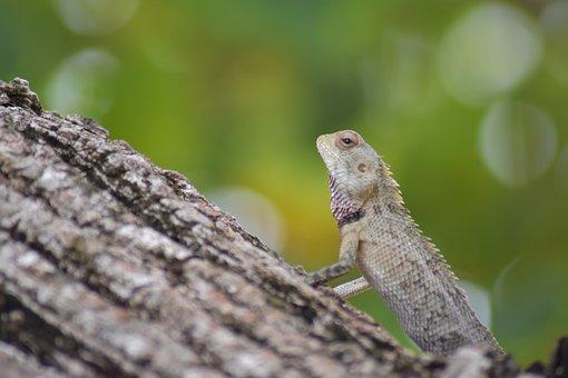Wild, Green, Nature, Forest, Natural, Outdoor, Lizard