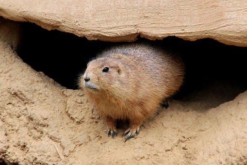 Zoo, Marmot, Animal, Rodent, Animal World, Nature, Fur