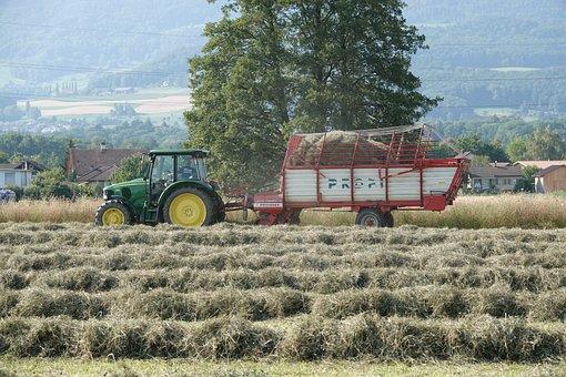 Agriculture, Hay, Field, Harvest, Landscape, Summer