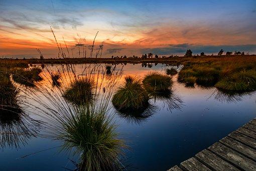 High Fens, Venn, Belgium, Landscape, Moor