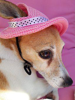 Pink, Jackrussell, Jack Russell, Doggie, Dog, Pet