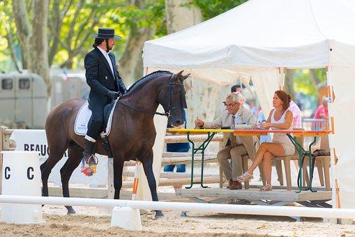 Horse, Contest, Sport, Horses, Horseback Riding, Jumper