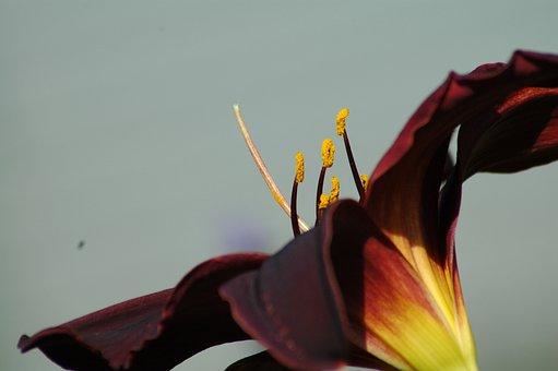 Nature, Flower, Beautiful, Flora, Color, Summer, Leaf
