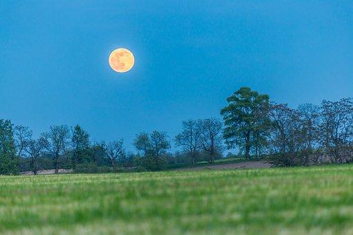 Moon, Field, Landscape, Meadow, Darkness, Evening, Tree