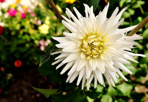 Flower, White, Summer, Plant, Blossom, Bloom, Nature