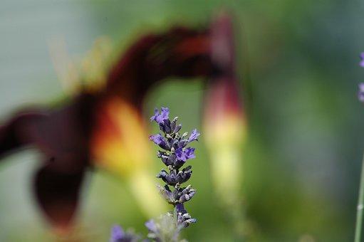 Nature, Flower, Blur, Flora, Outdoors, Summer, Leaf