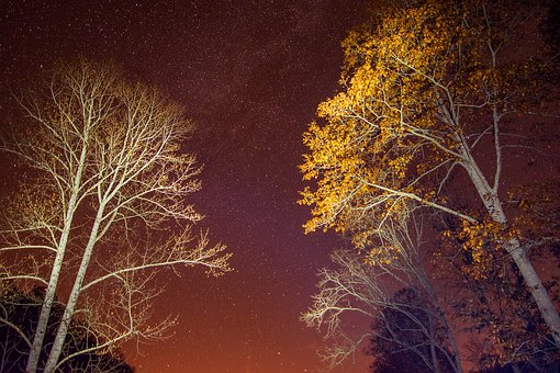 Night, Trees, Stars, Astrophotography, Wide Angle