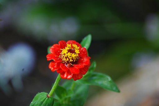 Nature, Flower, Flora, Leaf, Outdoors, Summer, Garden