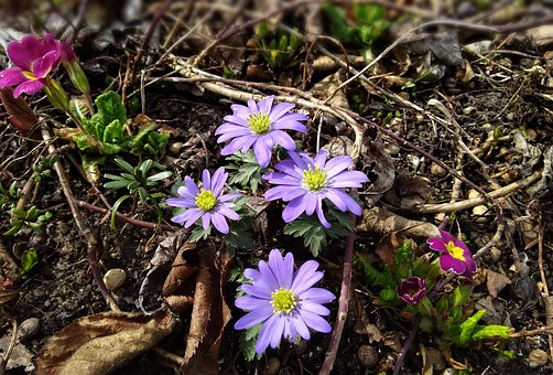 Flowers, Nature, Plant, Tender
