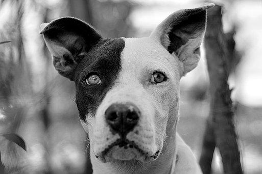 Dog, Pets, Snout, Portrait, Animals, Puppy, Race, Pet