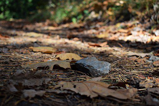 Stone, Forest, Nature, Autumn, Leaves, Forest Path