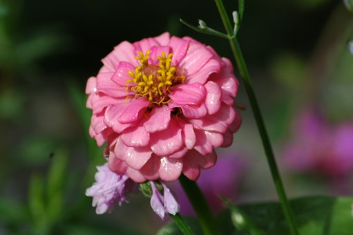 Nature, Flower, Flora, Summer, Garden, Petal, Leaf