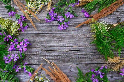 Wildflowers, Wild Flowers, Meadow, Nature, Summer
