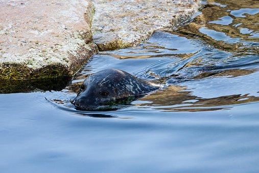 Sea Lion, Animal, Mammal, Animal World, Water